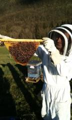 Fermaculture, apiculture